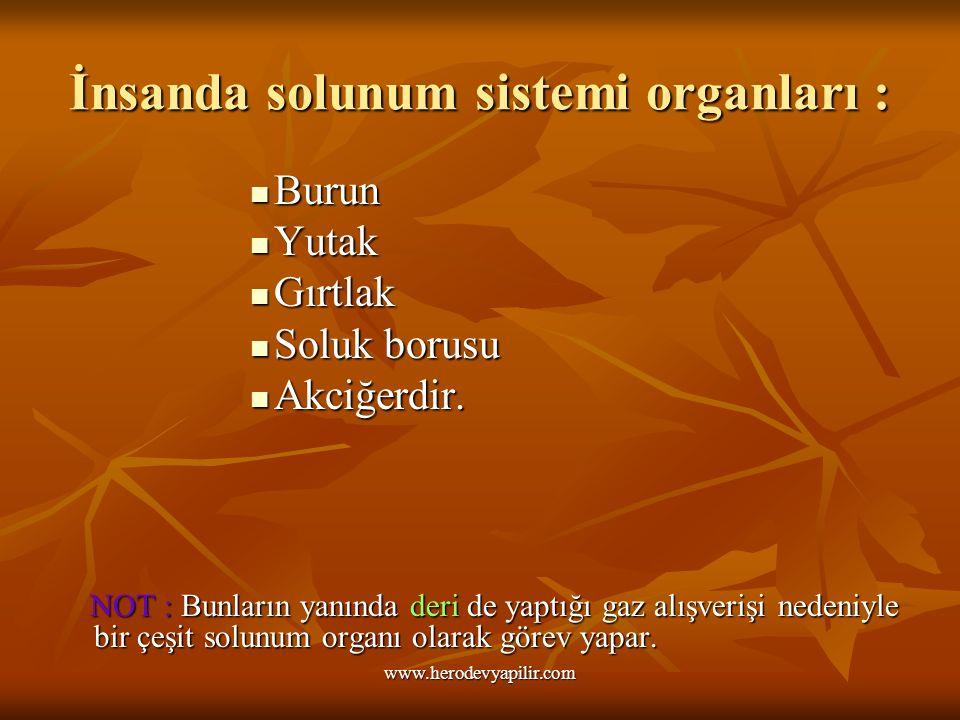 İnsanda solunum sistemi organları :