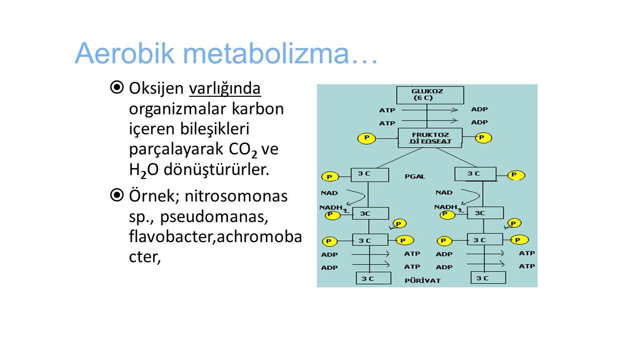 Aerobik metabolizma… Oksijen varlığında organizmalar karbon içeren bileşikleri parçalayarak CO2 ve H2O dönüştürürler.