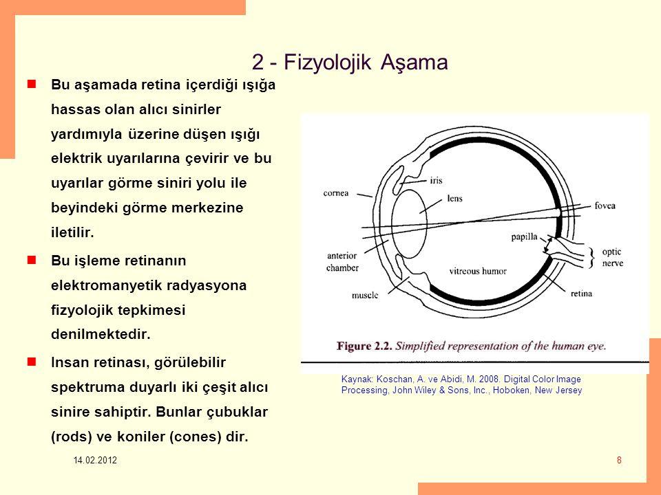 2 - Fizyolojik Aşama