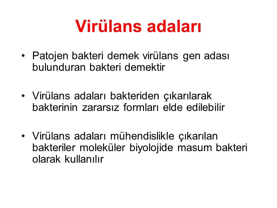 Virülans adaları Patojen bakteri demek virülans gen adası bulunduran bakteri demektir.