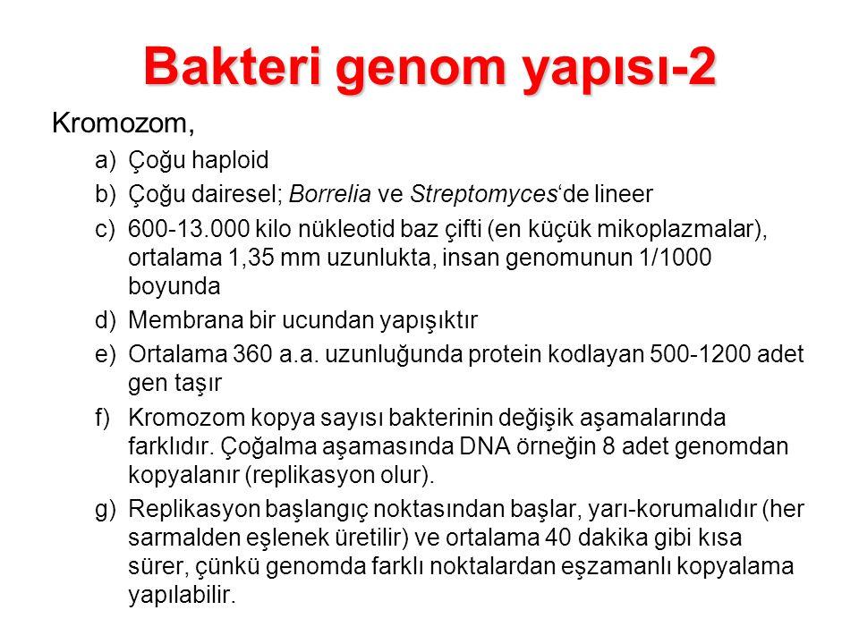 Bakteri genom yapısı-2 Kromozom, Çoğu haploid