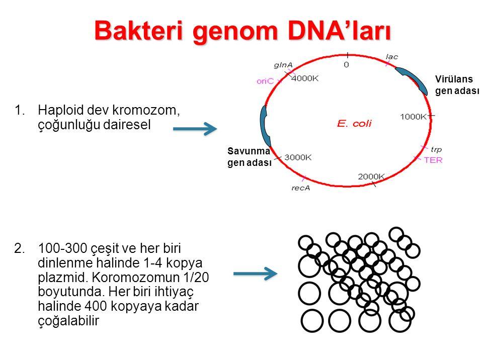 Bakteri genom DNA'ları