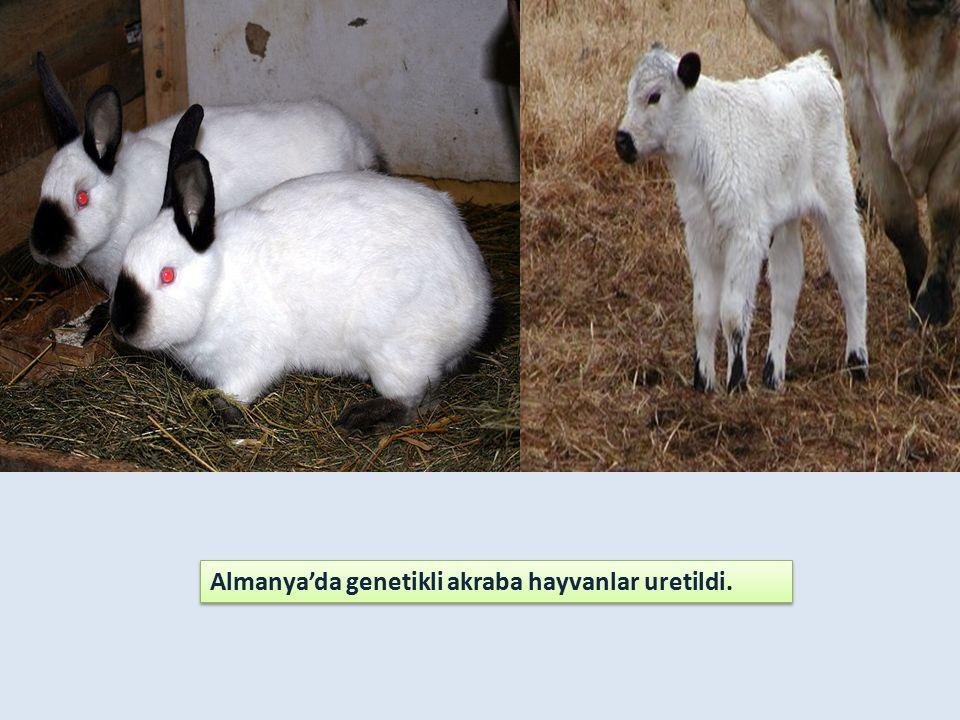 Almanya'da genetikli akraba hayvanlar uretildi.