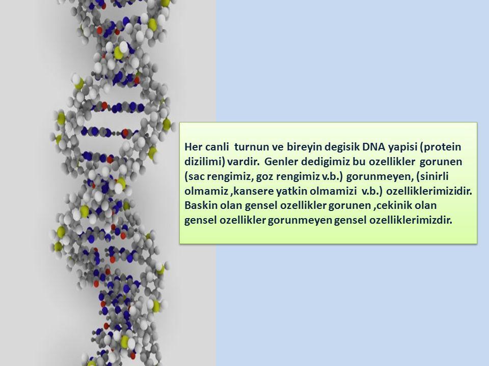 Her canli turnun ve bireyin degisik DNA yapisi (protein dizilimi) vardir.