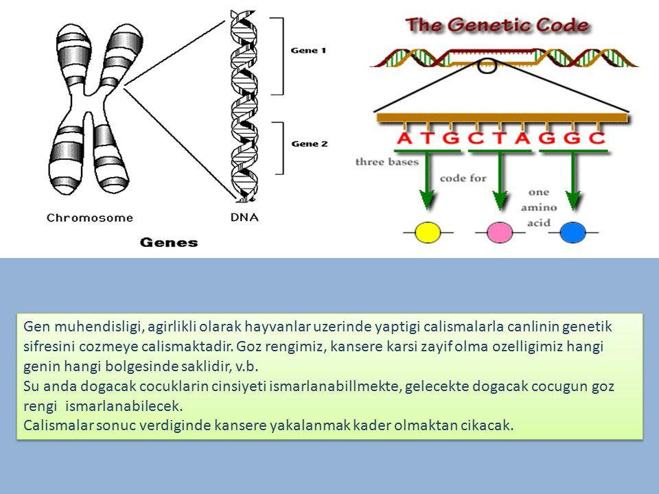Gen muhendisligi, agirlikli olarak hayvanlar uzerinde yaptigi calismalarla canlinin genetik sifresini cozmeye calismaktadir. Goz rengimiz, kansere karsi zayif olma ozelligimiz hangi genin hangi bolgesinde saklidir, v.b.