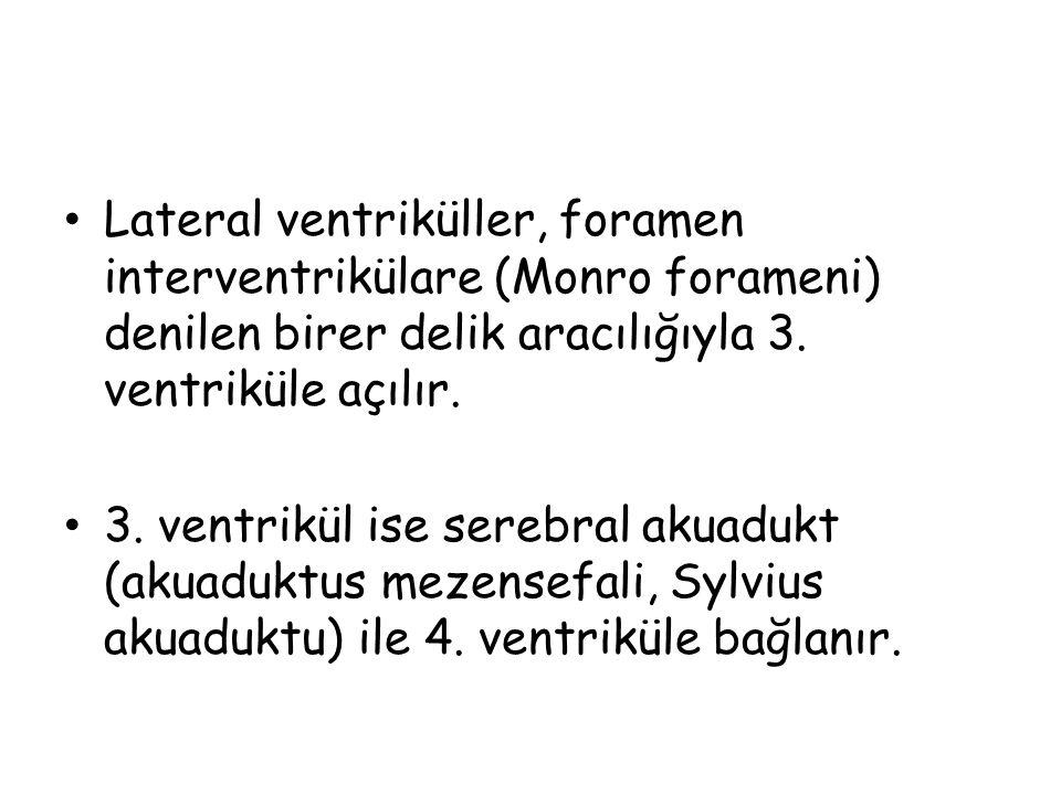 Lateral ventriküller, foramen interventrikülare (Monro forameni) denilen birer delik aracılığıyla 3. ventriküle açılır.