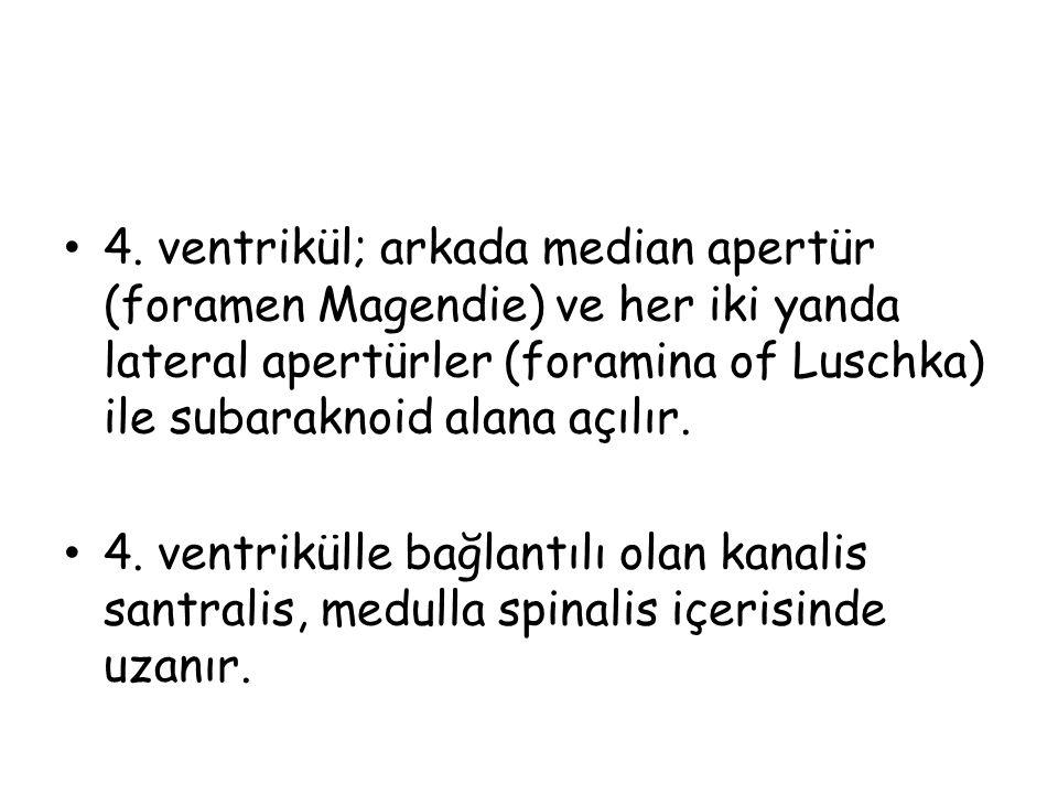 4. ventrikül; arkada median apertür (foramen Magendie) ve her iki yanda lateral apertürler (foramina of Luschka) ile subaraknoid alana açılır.