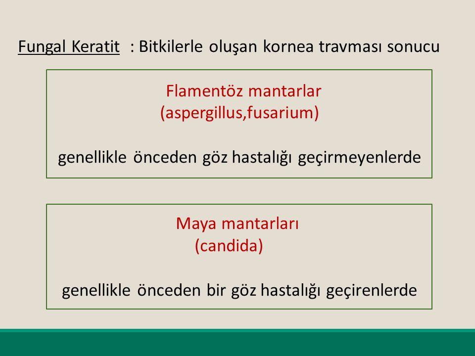 Fungal Keratit : Bitkilerle oluşan kornea travması sonucu