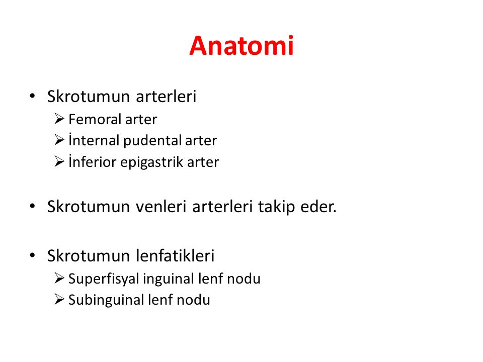 Anatomi Skrotumun arterleri Skrotumun venleri arterleri takip eder.