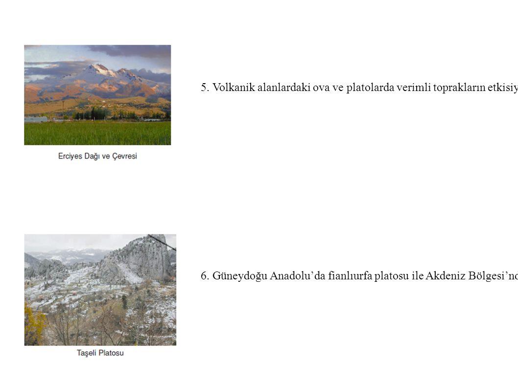 5. Volkanik alanlardaki ova ve platolarda verimli toprakların etkisiyle tarım ve yerleşme gelişmiştir. Örnek: Kayseri,Iğdır çevresi.