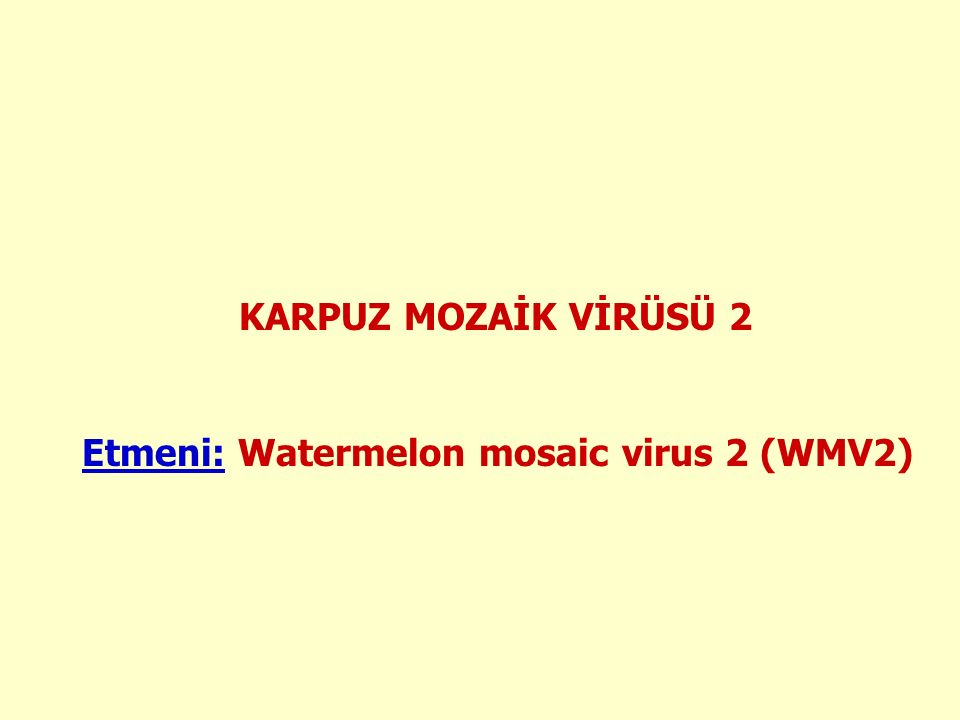 KARPUZ MOZAİK VİRÜSÜ 2 Etmeni: Watermelon mosaic virus 2 (WMV2)
