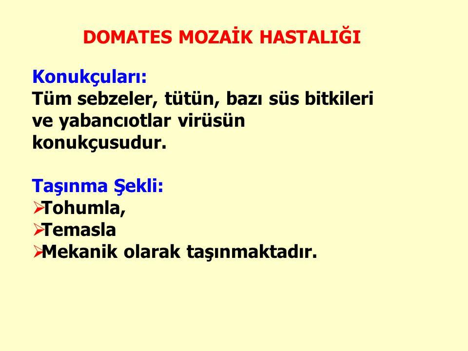 DOMATES MOZAİK HASTALIĞI