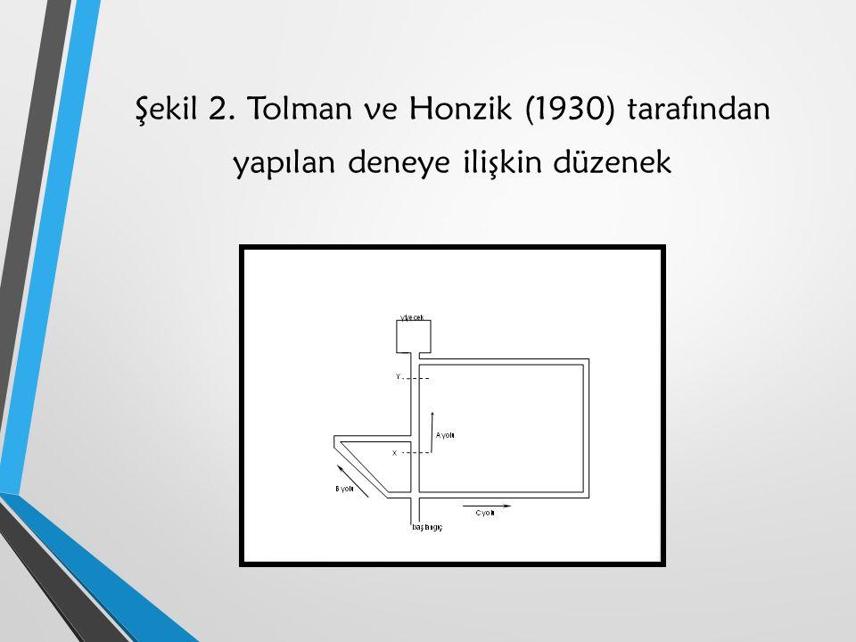 Şekil 2. Tolman ve Honzik (1930) tarafından yapılan deneye ilişkin düzenek