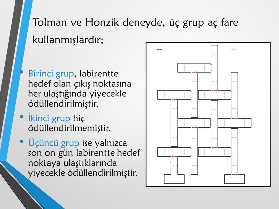 Tolman ve Honzik deneyde, üç grup aç fare kullanmışlardır;