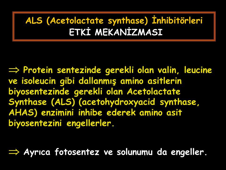 ALS (Acetolactate synthase) İnhibitörleri ETKİ MEKANİZMASI