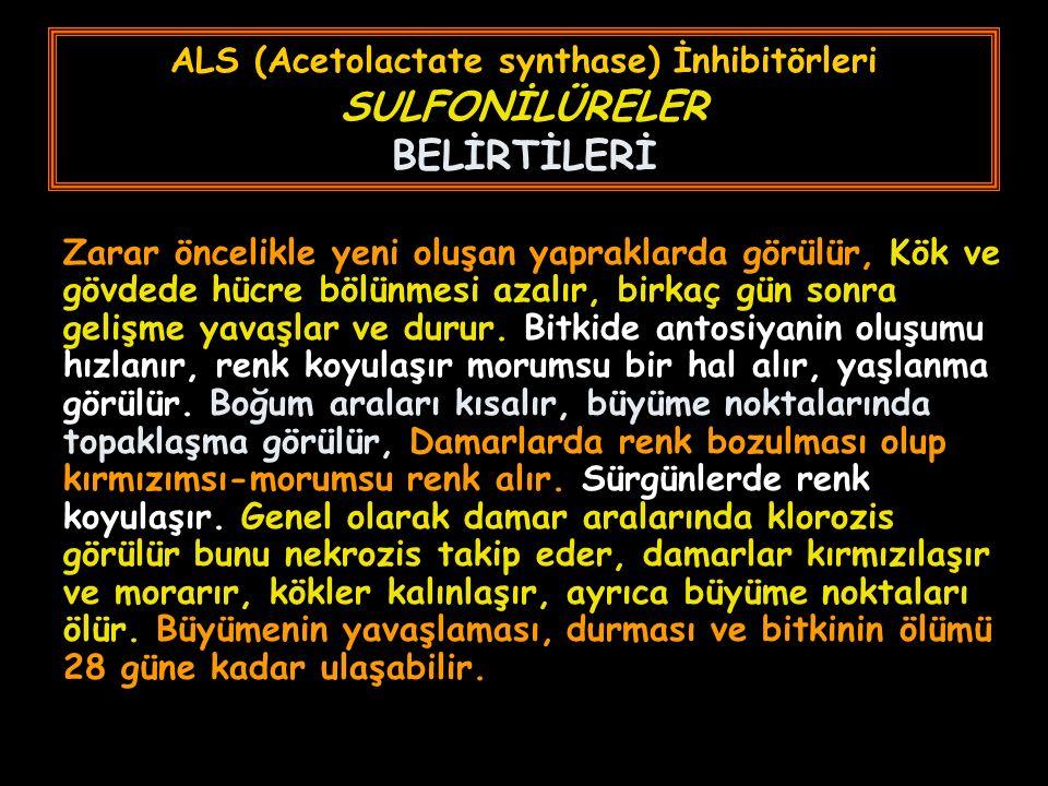 ALS (Acetolactate synthase) İnhibitörleri SULFONİLÜRELER BELİRTİLERİ