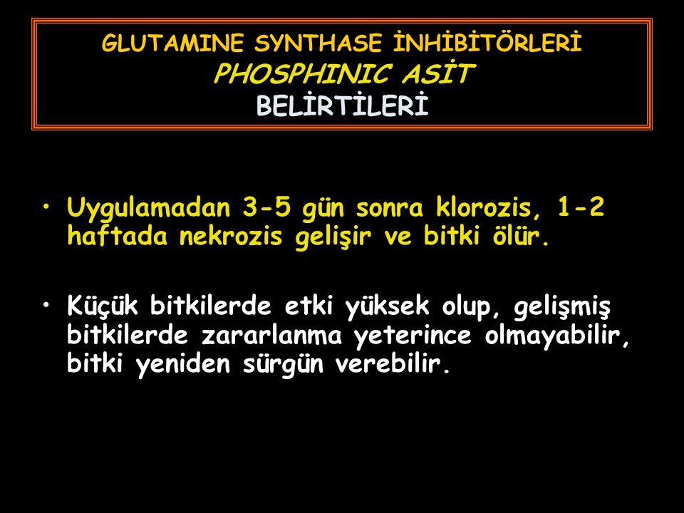 GLUTAMINE SYNTHASE İNHİBİTÖRLERİ PHOSPHINIC ASİT BELİRTİLERİ
