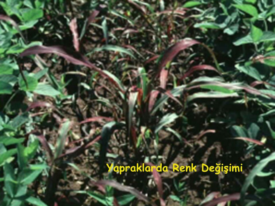 Yapraklarda Renk Değişimi