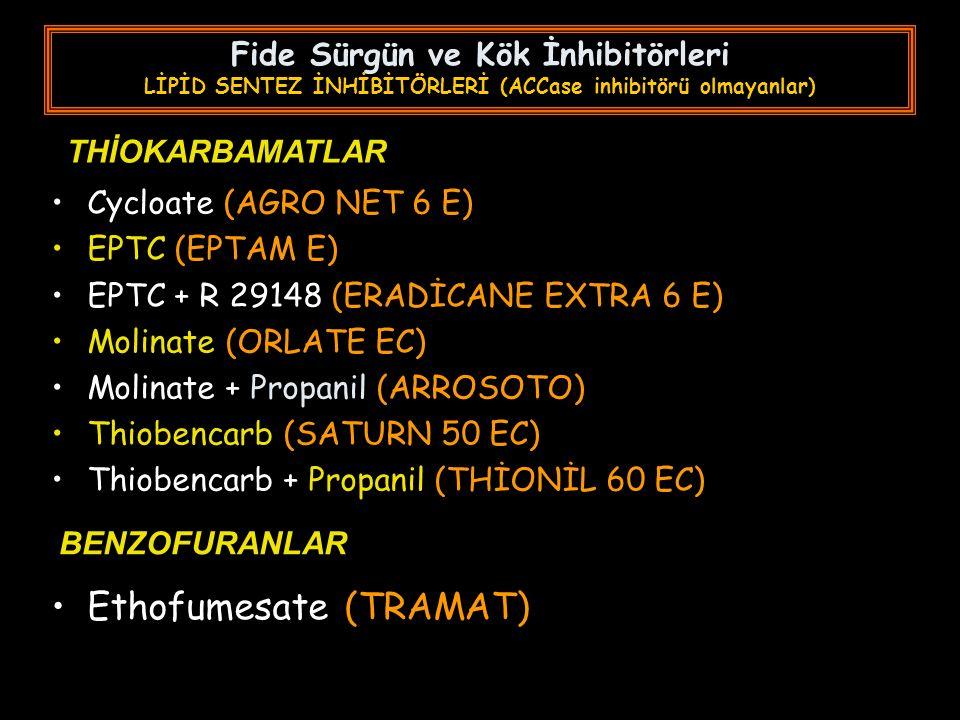 Ethofumesate (TRAMAT)