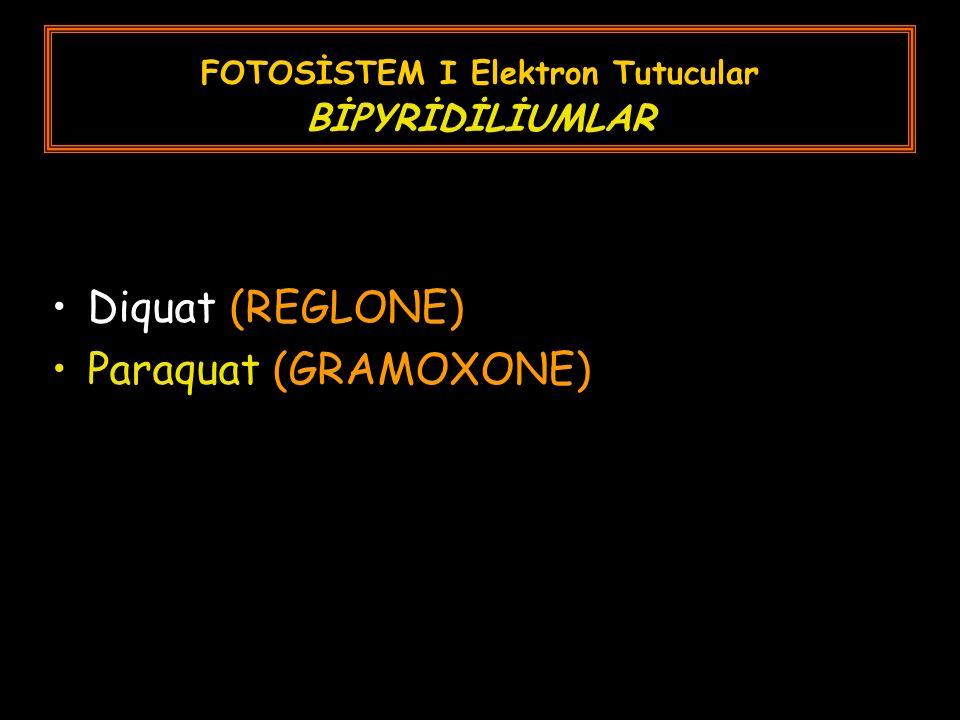 FOTOSİSTEM I Elektron Tutucular BİPYRİDİLİUMLAR