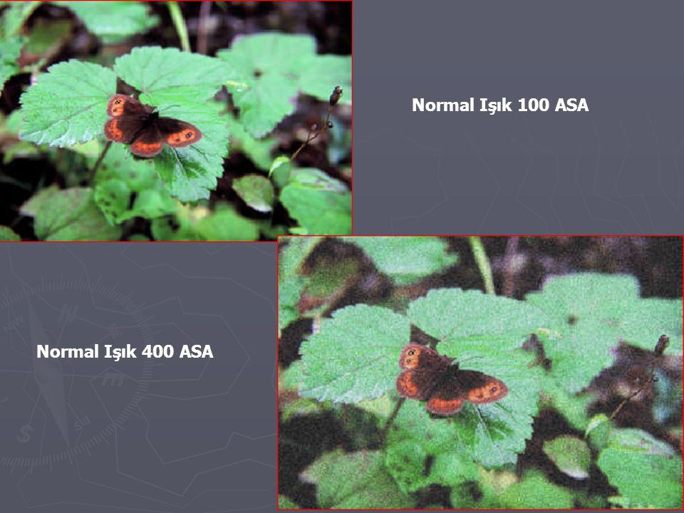 Normal Işık 100 ASA Normal Işık 400 ASA