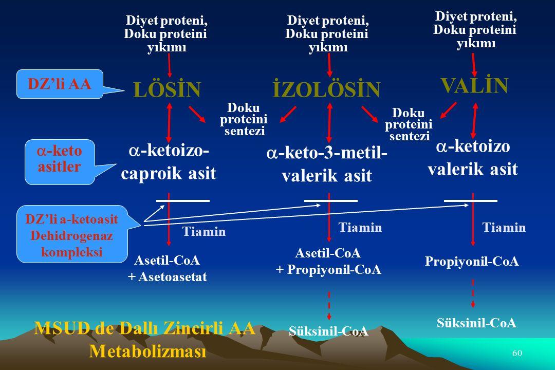 a-keto-3-metil-valerik asit MSUD de Dallı Zincirli AA