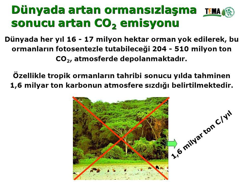 Dünyada artan ormansızlaşma sonucu artan CO2 emisyonu