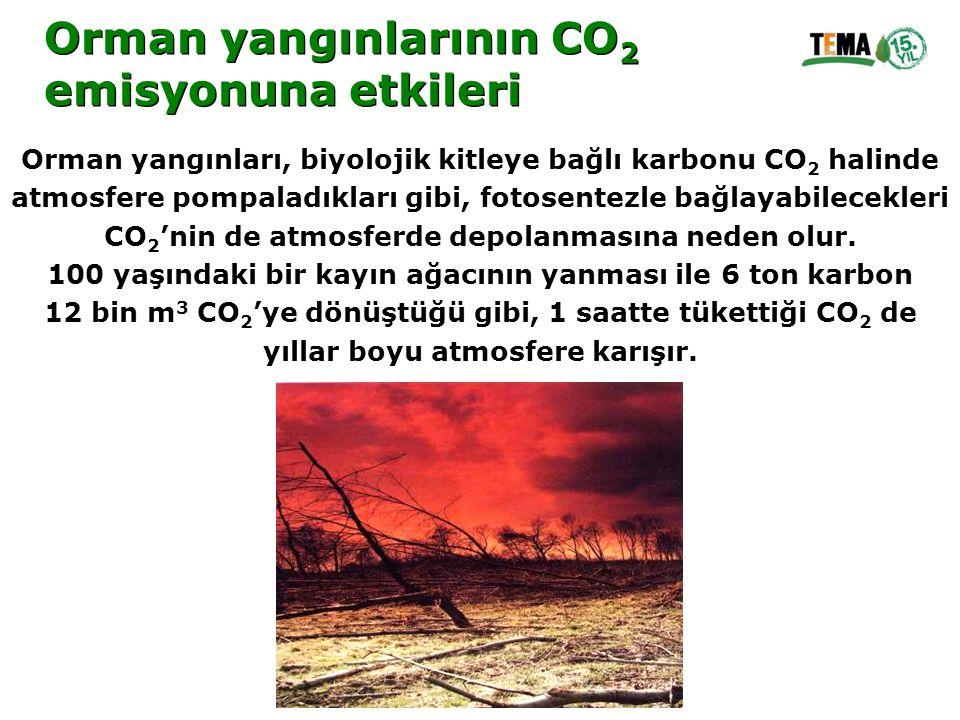 Orman yangınlarının CO2 emisyonuna etkileri