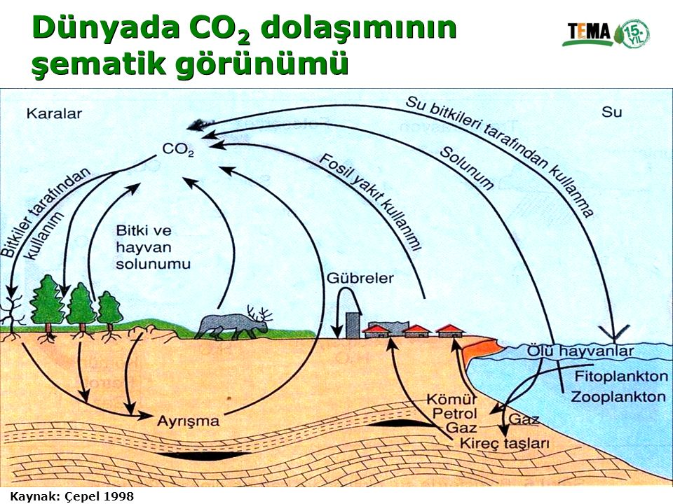 Dünyada CO2 dolaşımının şematik görünümü