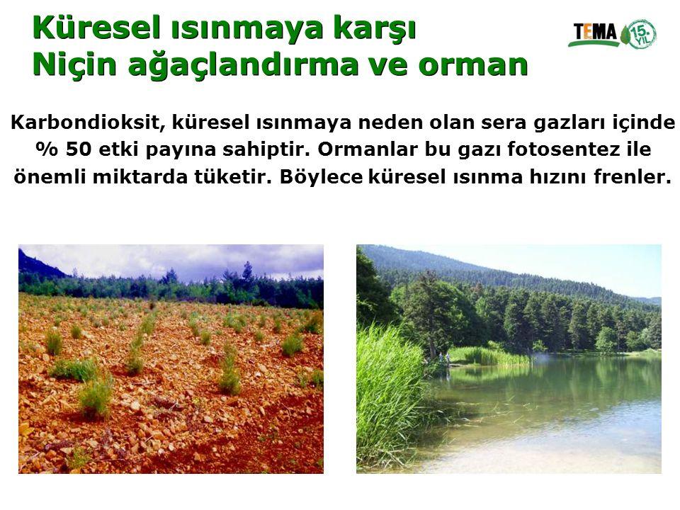 Küresel ısınmaya karşı Niçin ağaçlandırma ve orman