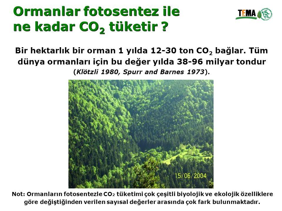 Ormanlar fotosentez ile ne kadar CO2 tüketir