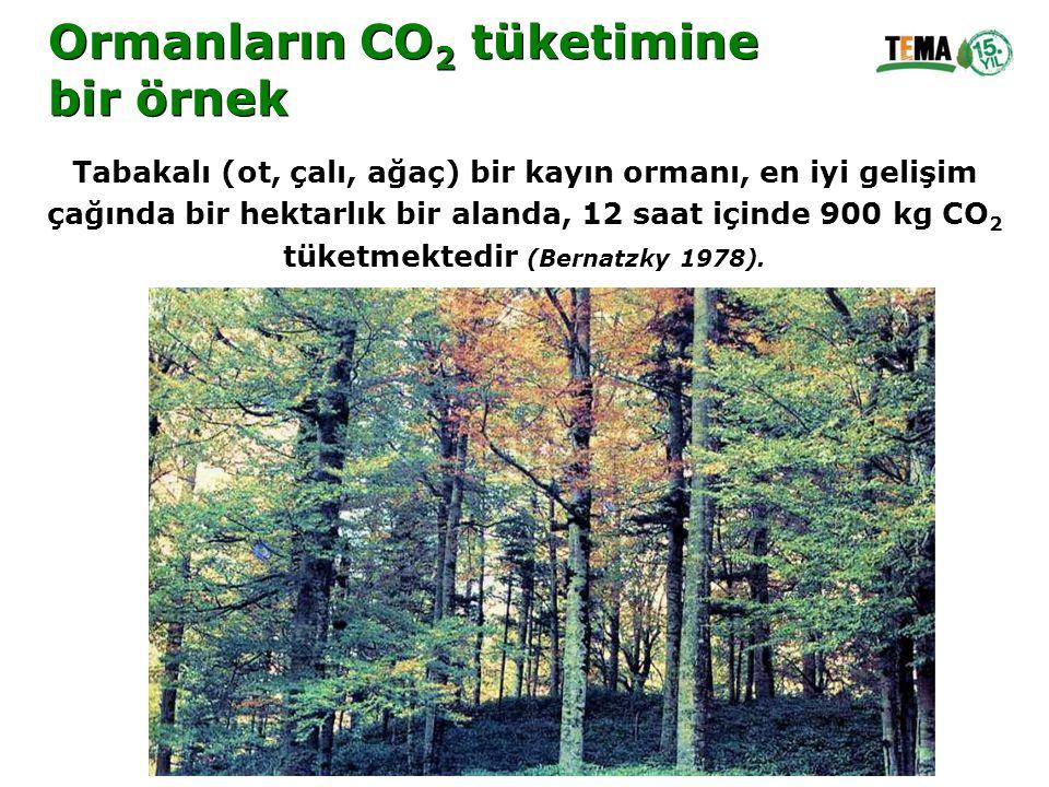Ormanların CO2 tüketimine bir örnek