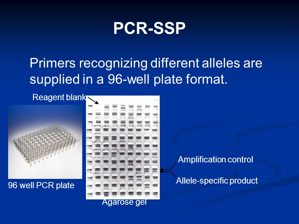 PCR-SSP Primers recognizing different alleles are supplied in a 96-well plate format. Reagent blank.