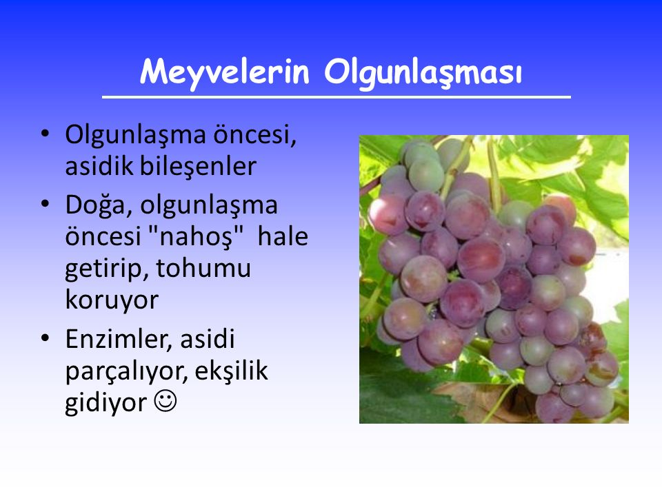 Meyvelerin Olgunlaşması