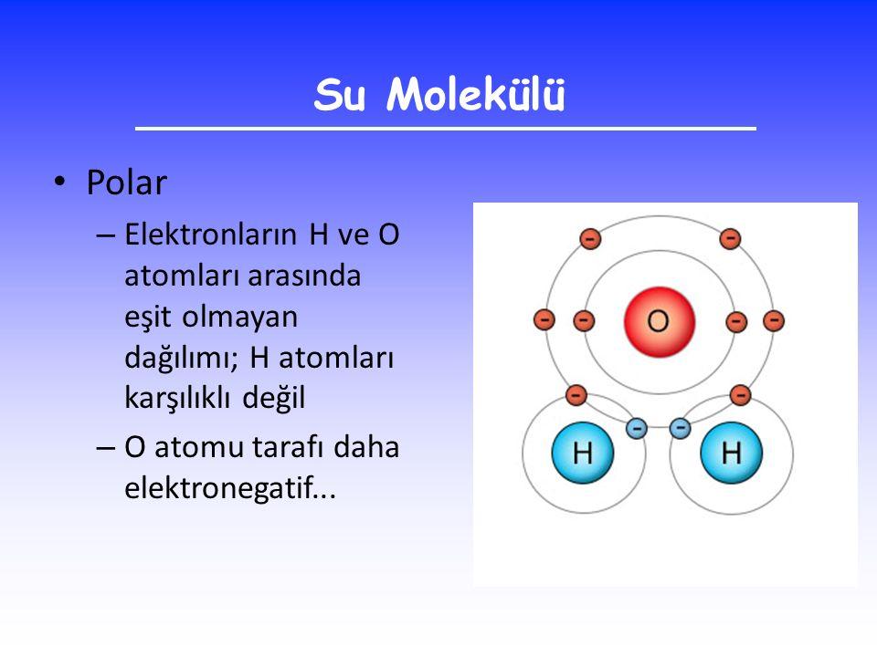 Su Molekülü Polar. Elektronların H ve O atomları arasında eşit olmayan dağılımı; H atomları karşılıklı değil.