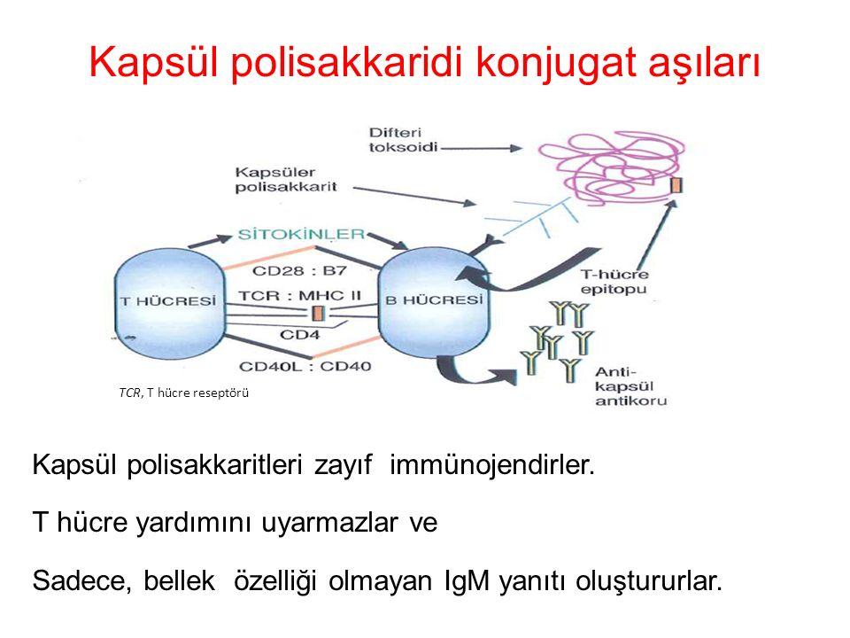 Kapsül polisakkaridi konjugat aşıları