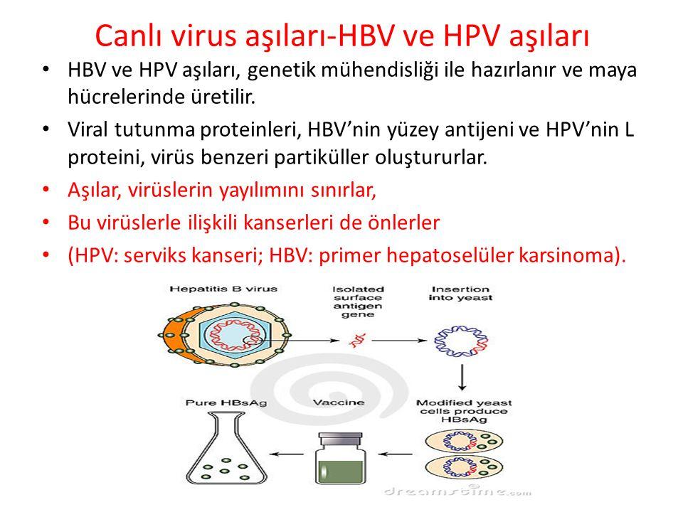 Canlı virus aşıları-HBV ve HPV aşıları