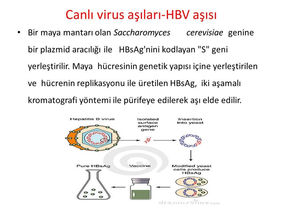 Canlı virus aşıları-HBV aşısı