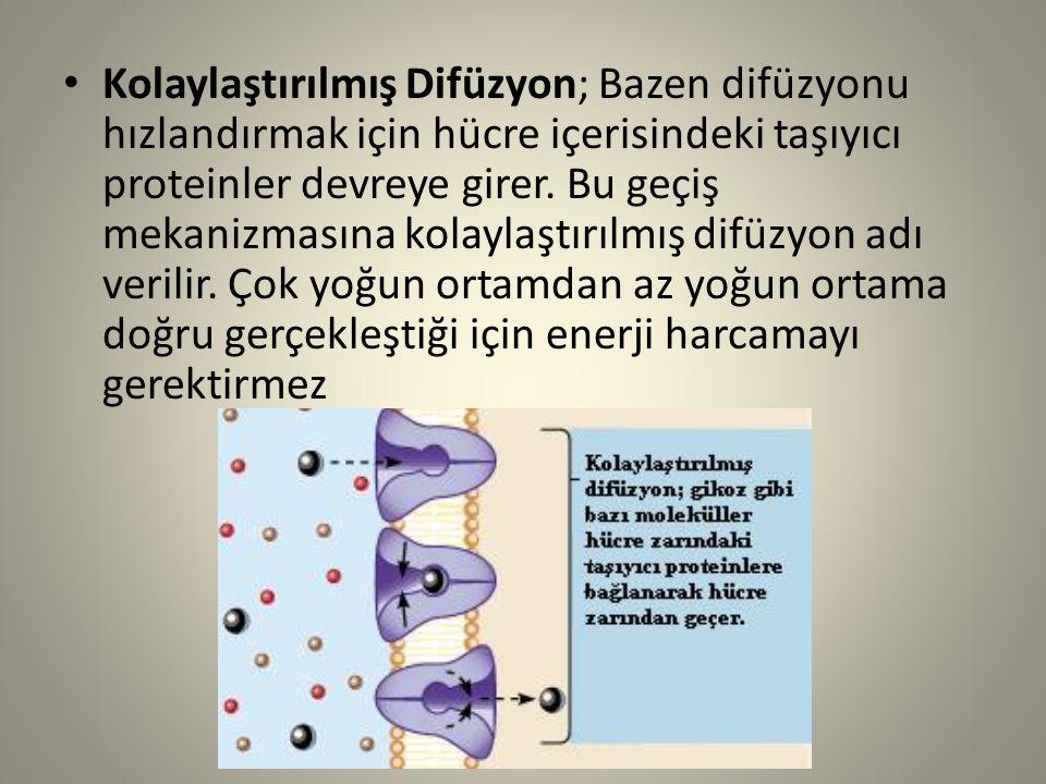 Kolaylaştırılmış Difüzyon; Bazen difüzyonu hızlandırmak için hücre içerisindeki taşıyıcı proteinler devreye girer.