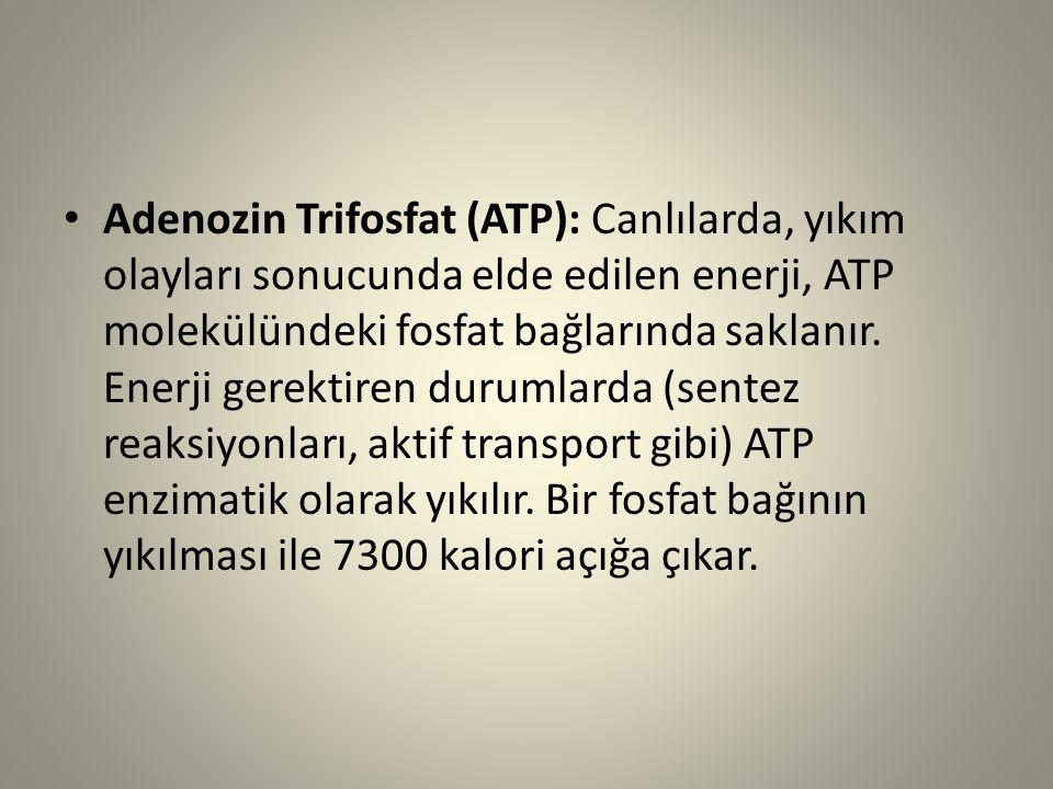Adenozin Trifosfat (ATP): Canlılarda, yıkım olayları sonucunda elde edilen enerji, ATP molekülündeki fosfat bağlarında saklanır.