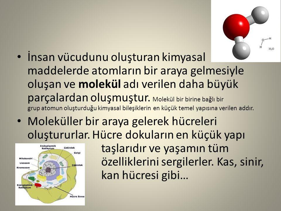 İnsan vücudunu oluşturan kimyasal maddelerde atomların bir araya gelmesiyle oluşan ve molekül adı verilen daha büyük parçalardan oluşmuştur. Molekül bir birine bağlı bir grup atomun oluşturduğu kimyasal bileşiklerin en küçük temel yapısına verilen addır.