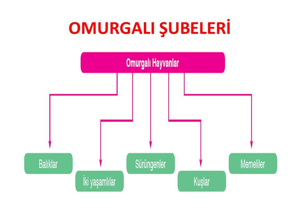 OMURGALI ŞUBELERİ 9FL