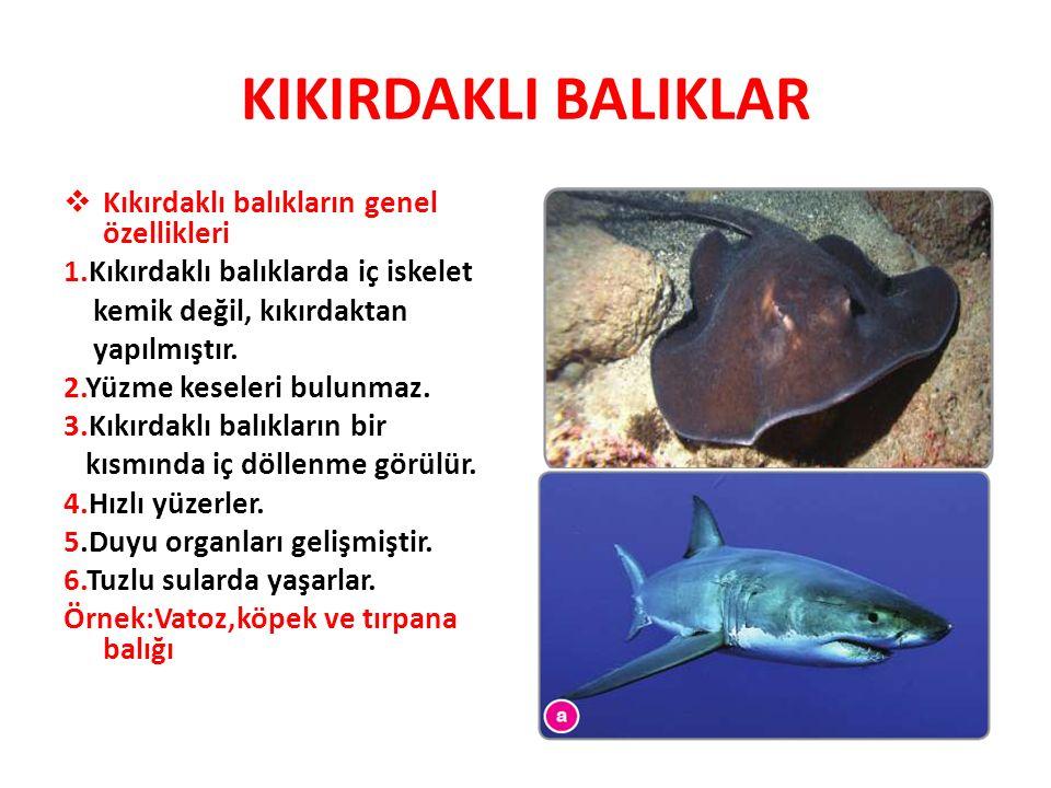 KIKIRDAKLI BALIKLAR Kıkırdaklı balıkların genel özellikleri
