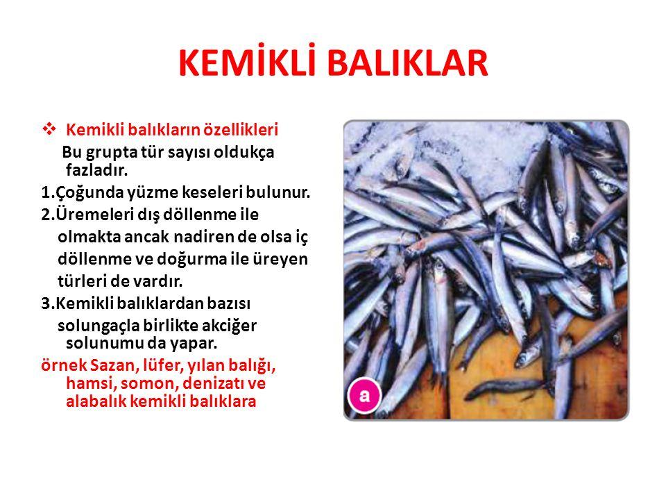 KEMİKLİ BALIKLAR Kemikli balıkların özellikleri