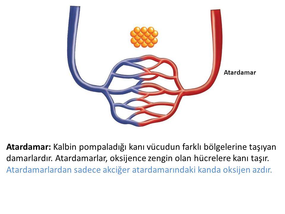 Atardamar