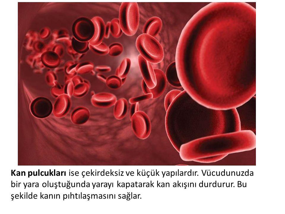 Kan pulcukları ise çekirdeksiz ve küçük yapılardır. Vücudunuzda