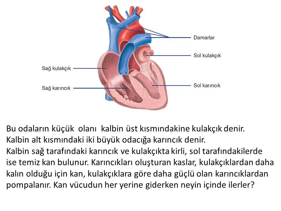 Bu odaların küçük olanı kalbin üst kısmındakine kulakçık denir.