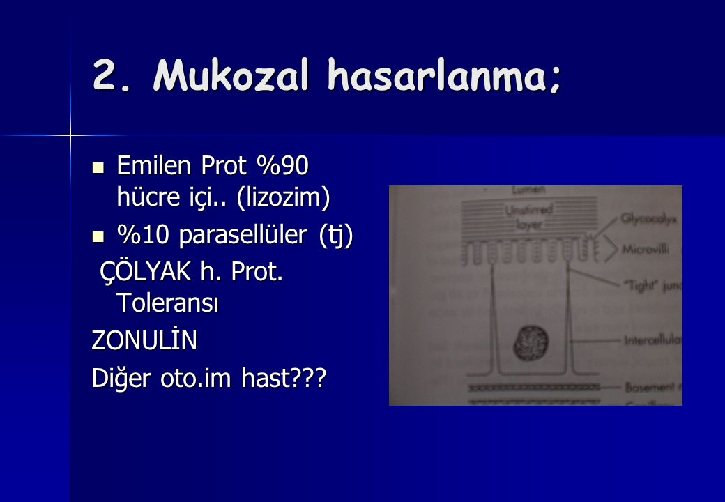 2. Mukozal hasarlanma; Emilen Prot %90 hücre içi.. (lizozim)