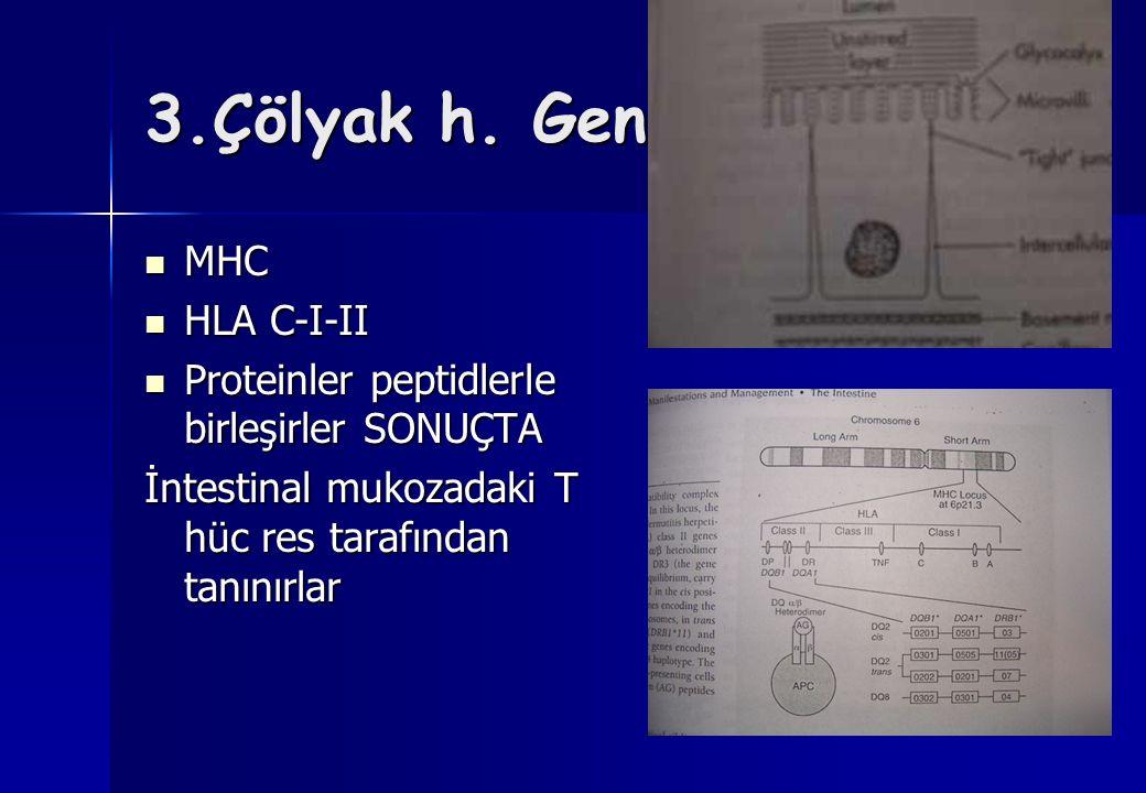 3.Çölyak h. Genetik yapı MHC HLA C-I-II