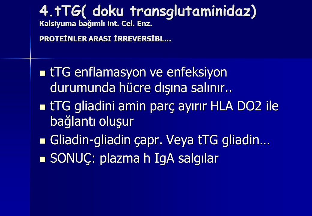 4. tTG( doku transglutaminidaz) Kalsiyuma bağımlı int. Cel. Enz